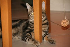 surya dov' (Lina Prema Polmonari) Tags: gatto nero micio tigrato
