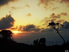 Before Darkness - Antes de oscurecer (N.Pz) Tags: light sunset sea horses horse costa naturaleza sol nature clouds contrast atardecer caballos coast mar twilight view darkness nubes contraste puestadesol oscuridad luscofusco