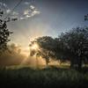 Beautiful! (VillaRhapsody) Tags: landscape sunrise dawn sun light rays spring foggy fog mist turkey fethiye kayaköy tree trees challengeyouwinner cyunanimous cy2