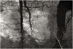 göhl 263 (beauty of all things) Tags: reflection creek belgium bach spiegelung belgien geul göhl lagueule gostert