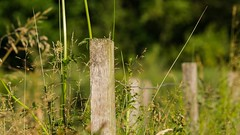 HFF-Happy Fence Friday (Yasmine Hens) Tags: nature fence lumix europa flickr belgium ngc panasonic dmc namur hens yasmine wallonie clture hff iamflickr flickrunitedaward happyfencefriday panasonicdmcgx8 hensyasmine