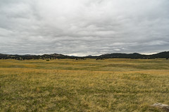Black Hills Prairie (s.d.sea) Tags: road park trip travel vacation black green nature field forest landscape outdoors spring midwest state pentax cloudy loop wildlife south hill meadow overcast hills national prairie dakota custer
