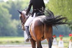 IMG_1109 (dreiwn) Tags: horse pony horseshow pferde pferd equestrian horseback reiten horseriding showjumping dressage reitturnier dressur reitsport dressyr ilsfeld dressuur ridingclub junioren ridingarena pferdesport springreiten reitplatz reitverein dressurreiten dressurpferd dressurprfung tamronsp70200f28divcusd jugentturnier