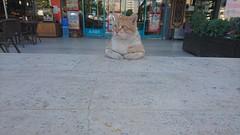Sabah keyfi (gultekin.cangul) Tags: pet look cat friend istanbul kedi streetcat hayvan bak