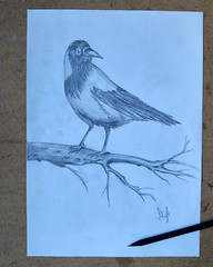 The Crow (mefefirat) Tags: art tattoo illustration pencil ink pencils sketch artist arty arte drawing sketching arts drawings sketchbook sketchs crow draw draws inked pencilart pencildrawing robotdrawing