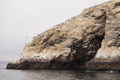 2837 (whatableeblah) Tags: ocean seagulls peru nature birds animals outdoors island coast pacific paracas ballestas