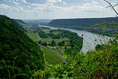 20160526-132737 (lichtschattenjaeger) Tags: rheinlandpfalz rhein leutesdorf hammerstein rheinsteig wein weinstock weinanbau schtzenweg