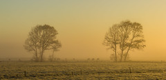 Grazinig (zebedee1971) Tags: morning trees winter light orange grass fog sunrise fence cow soft frost farm hues paddock natureandnothingelse