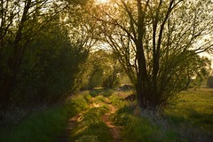 spring (JoannaRB2009) Tags: charbice dzkie lodzkie polska poland spring goldenhour light sunlight nature path road meadow green trees grass landscape view walk dolinaneru