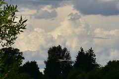 Heron_7717 (johnmoffatt2000) Tags: pwgen cloud sky weather pw pwweather water clouds day issaquah sammamish redmond