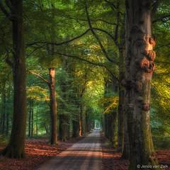 Early morning light ( Jenco van Zalk) Tags: nature light summer square oak woods character lane beech netherlands firstlight naturepics trees leaves tranquillity sunlight
