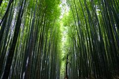 DSCF2264 (Sid Huang) Tags: camera travel japan photography kyoto flickr fuji view snap  fujifilm osaka   fujinon  fujicolor streetsnap xt10 visionsinmyhead xf1855f284rlmois sidhuang xf35mmf2rwr