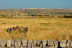 Sicily-015 (graziellaminardi) Tags: campagna campo sicily sicilia grano secco sfondi spina muretto naturaiblea