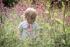 Little Explorer (brianmiller006) Tags: family flowers woodland child national trust