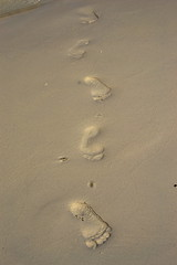 When my footprints will not tread here anymore (Kaniz Khan 2009) Tags: feet foot seaside sand mark steps footprints seasand