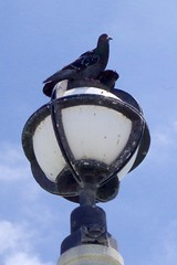 Lamppost Lounger (kristenlanum) Tags: california blue wild summer sky bird beach water lamp pier losangeles wildlife lamppost round manhattanbeach