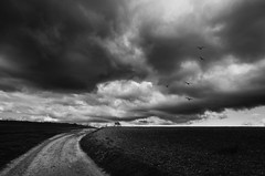 Huyendo de la tormenta / Scape from the storm (tmuriel67) Tags: monochrome blackwhite blancoynegro bw paisaje landscapes conceptual abstract nubes clouds cielo sky birds storm outdoors