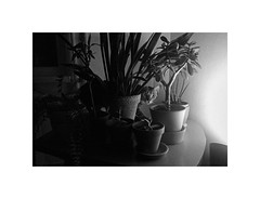 Scrap of the dream (Marek Pupk) Tags: blackandwhite bw plants monochrome animal cat europe central dream documentary slovakia henri rousseau