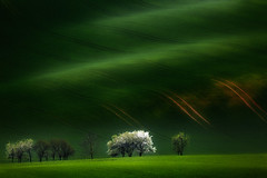 The Colour of Spring (Bonnie And Clyde Creative Images) Tags: morning travel trees light canon landscape czechrepublic moravia