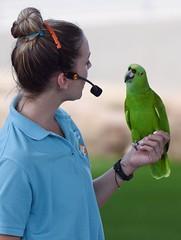 Parrot at Miami Metro Zoo (yan.cabrera) Tags: bird nikon parrot d750 cotorra miamimetrozoo