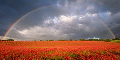 Rainbow Over The Hill (Stu Meech) Tags: light field evening rainbow nikon stu poppy poppies d750 salisbury wiltshire 1635 meech bishopstone