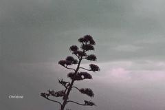 IMG_5793 (christinehag) Tags: tree nature φύση φυτό δεντρο
