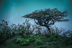 In Green (Ali Sabbagh) Tags: tree oman autumn canon eos7d landscape topaz labs nature mist colors life