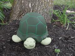 ** Un nouveau look ** (Impatience_1 (Mon PC- probl. interm.)) Tags: philomne tortue turtle dcoration decoration dcorationdejardin gardendecoration m impatience vert green supershot coth abigfave