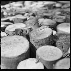 log pile (Grau) Tags: mamiya c330 c330f wood log tmy2 tmax analog film d76 kodak tlr mediumformat 120