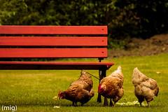 Bajo Los Tilos ((mig)) Tags: canon bench los bajo banco asturias gallina tilos