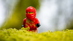 The grass is always greener on the other side of the North Sea (Reiterlied) Tags: red macro norway lens toy photography prime nikon lego ninja sigma kai minifig bergen dslr minifigure 105mm d5200 legography ninjago stuckinplastic reiterlied