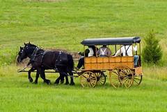 Horse & Buggy (cmfgu) Tags: gettysburg battle battlefield reenactment pa pennsylvania adamscounty civilwar horse buggy army craigfildesfineartamericacom