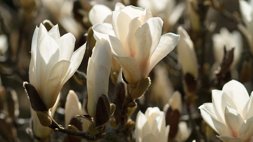 Sunshine and Magnolia 9329