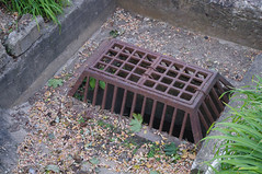 (Shane Henderson) Tags: plants leaves pittsburgh rusty drain cover southsideslopes