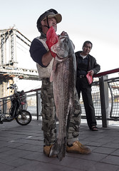 Biker catches big east river bass (Several seconds) Tags: newyork river fisherman bass manhattan manhattanbridge gothamist bigfish 43in