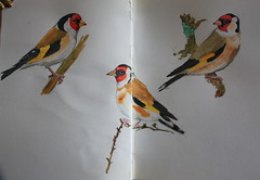 Goldfinch (noriko.stardust) Tags: color colour art watercolor painting paint drawing journal watercolour carduelis