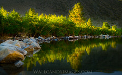 Convict lake (Dustin Penman) Tags: morning trees lake yellow sunrise reflections free dustin backlit convict penman