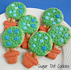 Topiary Sugar Cookies with Royal Icing Transfer Flowers (. . . Sugar Dot Cookies . . .) Tags: flowers topiary sugarcookies royalicing jerseystopiariestrain