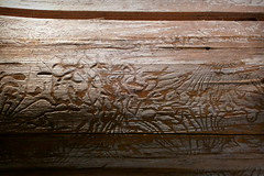 What the worms can draw (SnapHands) Tags: wood detail forest draw worm