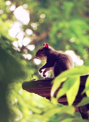 (Venusian Lady) Tags: tree cute nature leaves landscape squirrel focus bokeh tennessee wildlife adorable greentones timsfordstatepark