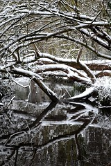 Snow Reflections on the Fallen Tree. (A-Lister Photography) Tags: christmas uk winter portrait snow tree nature water beautiful weather woodland reflections river festive season landscape countryside frost country fallentree christmascard coldtemperature adamlister nikond5100 alisterphotography