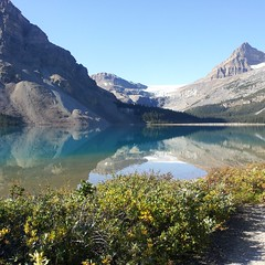 Bow Lake, Banff National Park, Alberta, Canada (Jim Shreve) Tags: lake canada mountains water nationalpark roadtrip alberta banff shrubs