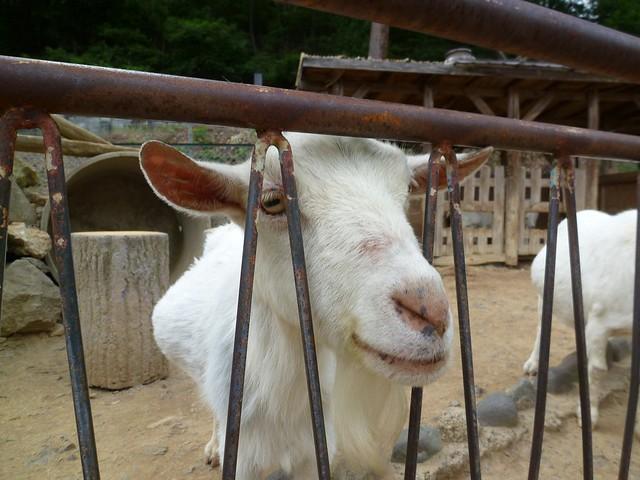 南園の1番奥には…|須坂市動物園