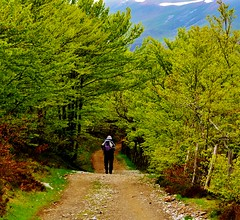 Walk into the Wild (mullan_conor) Tags: travel trees snow mountains colour nature leaves spain alone outdoor walk hike trail hiker