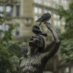 L1002655 (sswee38823) Tags: street leica city bird birds statue boston ma photography bokeh pigeon massachusetts pigeons bostonma leicam noctilux095 noctiluxm50mmf095asph irishfaminememorialbostonma02108