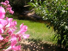 DSCN3057 (t_y_l) Tags: 2005 grass ikaria july wicker christos osier oliander raches