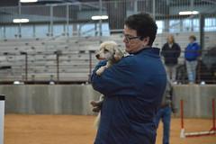 agility257 (jaimekay16) Tags: dog training austin agility k9 xpress nadac k9x