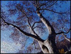 Conversazione con l'albero (ninin 50) Tags: autunno ninin photoilfineart alberoterapia