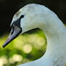 17/365 Swan