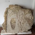 Bather mosaic from Banasa thumbnail